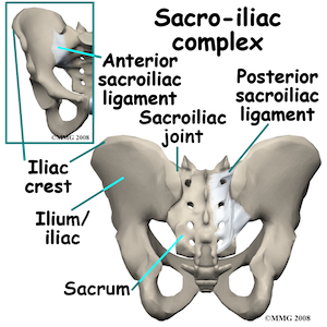 adult_pelvis_fx_anatomy02_resized Nov 29 2015